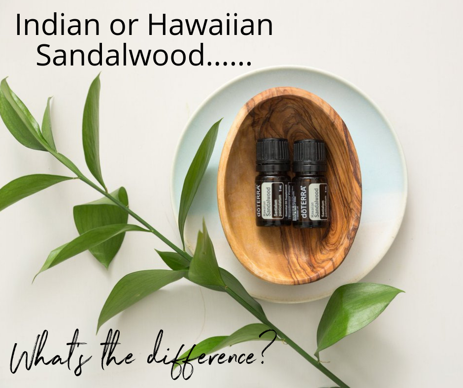 The Difference Between Indian Sandalwood and Hawaiian Sandalwood