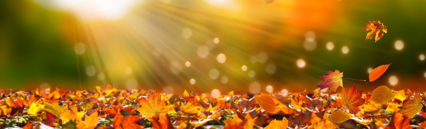 beautiful fall leaves... embrace the fall season with essential oils that will help you cultivate gratitude and get things done!
