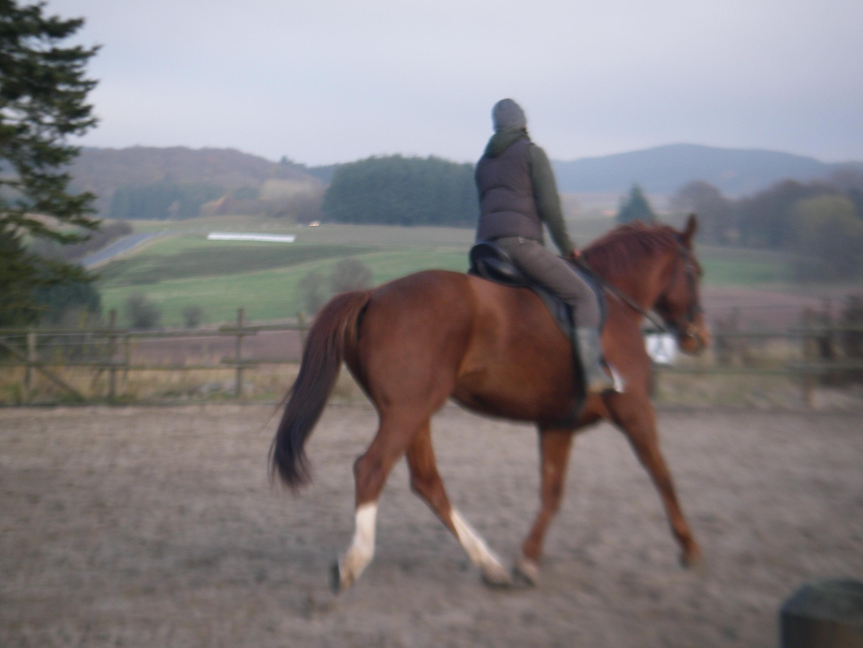 Amanda trains horse in Europe
