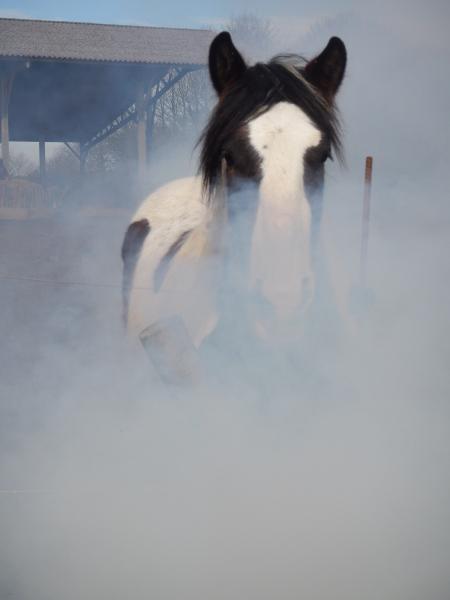 Dougal in the Mist - Oils for Horses