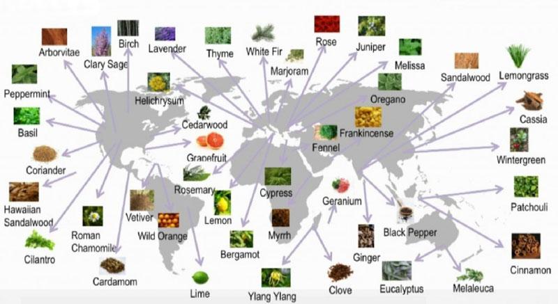 doTERRA Sourcing Map